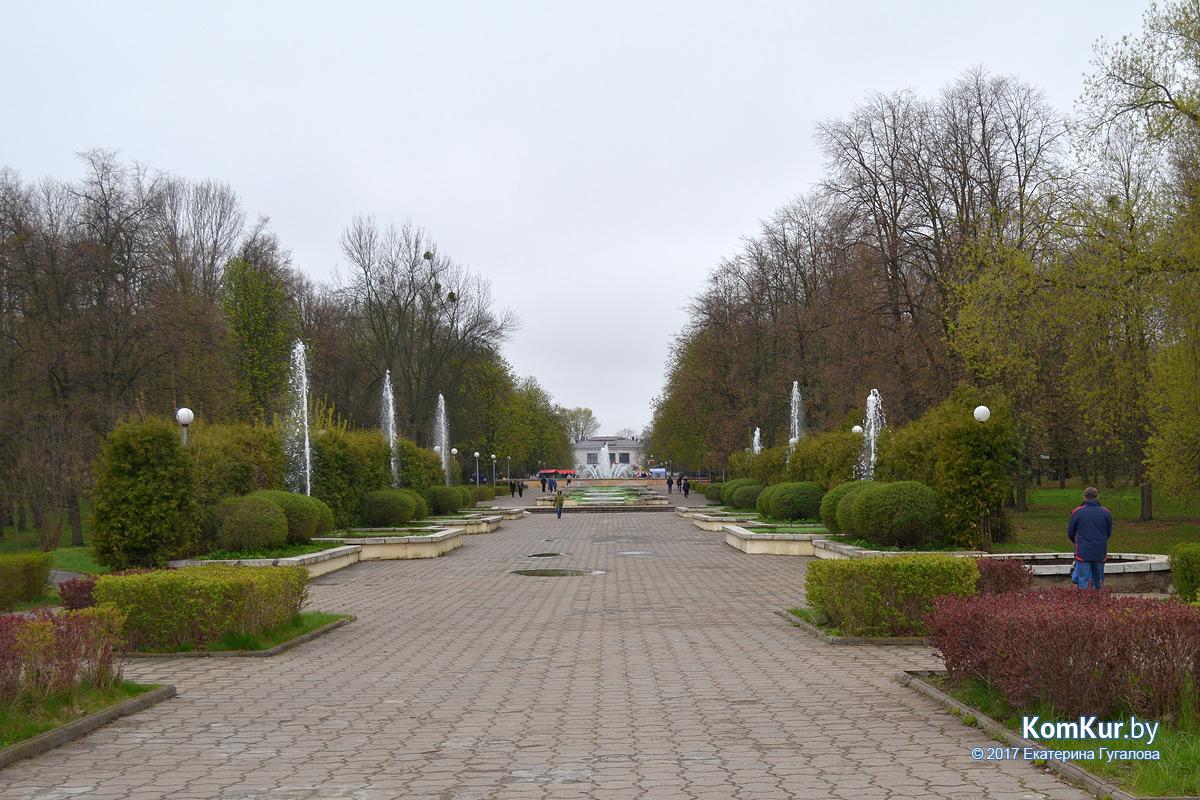 роза молодило фото парк бобруйск женщина имеет