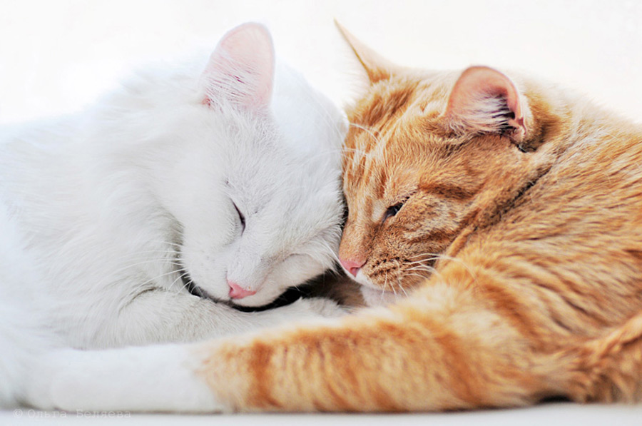 множество картинки ласковых котиков уюта семейной зоне