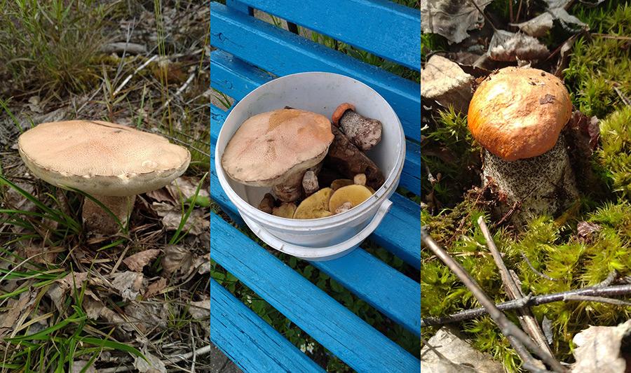 Вы не поверите – в лесу под Бобруйском появились грибы! (+ фото)