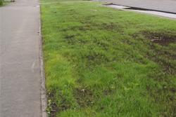 «Коммерческий» на связи: Вытоптанный газон