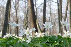 Весенняя погода придет в Беларусь в конце марта
