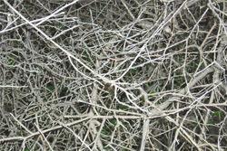 «Коммерческий» на связи: Кто подстрижет сухие ветви?