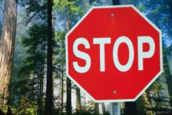 Запрет на посещение лесов Могилевской области пока вводить не планируется