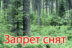 Запрет на посещение лесов снят