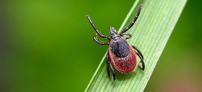 Какие насекомые опасны в августе и сентябре