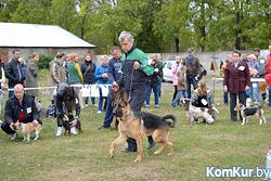 Республиканская выставка собак прошла в Бобруйске. Фоторепортаж