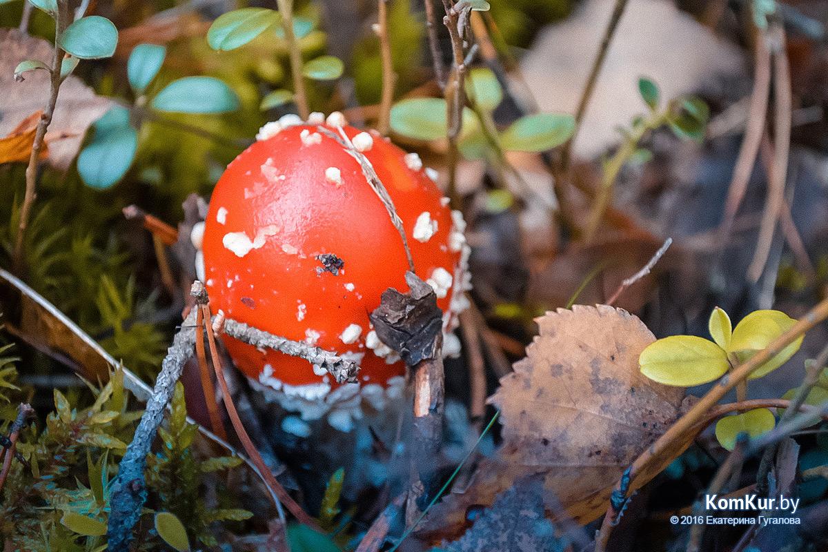 Как корреспондент «Коммерческого курьера» по грибы ходила