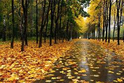 Дожди и порывистый ветер прогнозируются в Беларуси на этой неделе