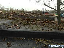 В Бобруйске дерево упало на гараж