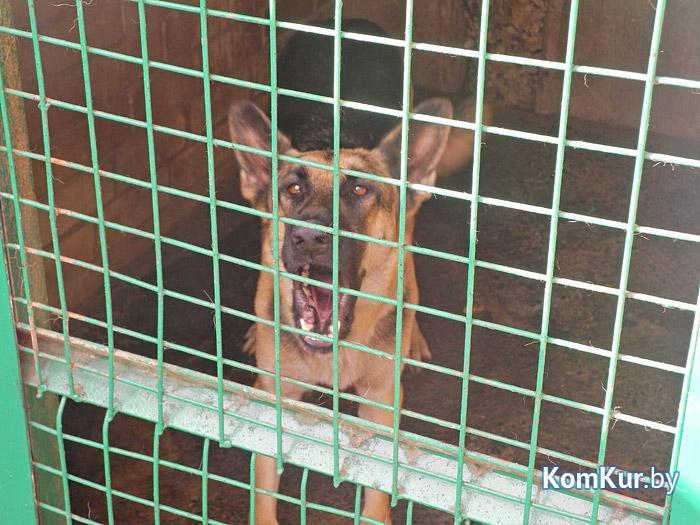Почему животные нападают на бобруйчан?