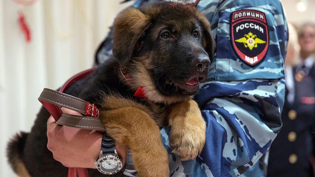 Подаренную Франции собаку Добрыню признали непригодной к службе