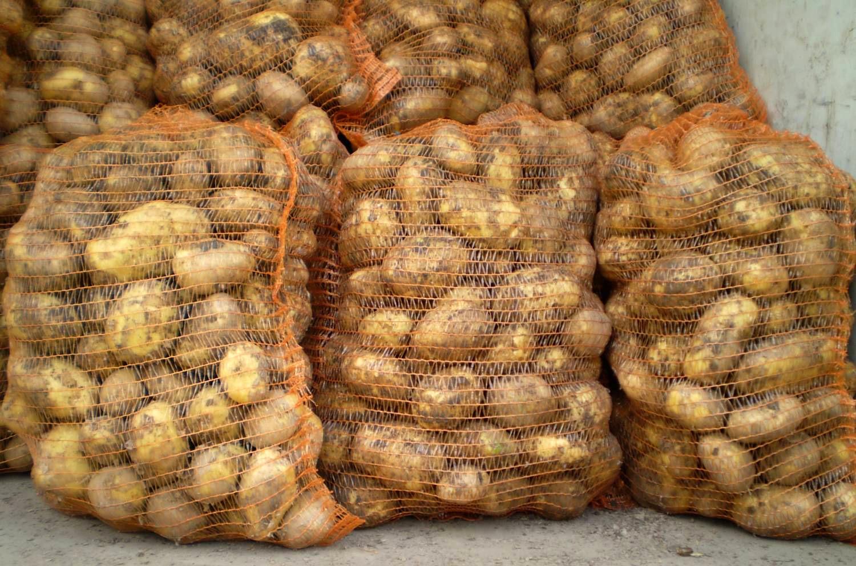 «Коммерческий» на связи: Есть место для картошки!