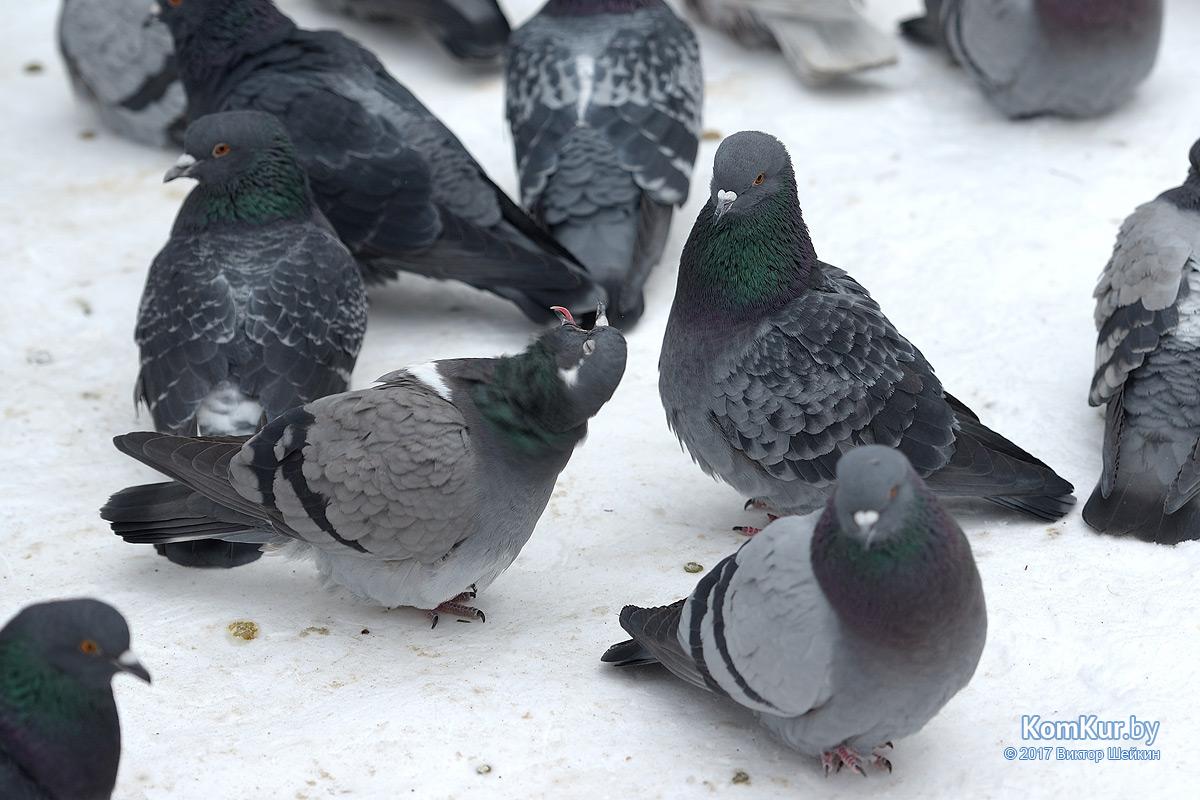 Мороз и голуби