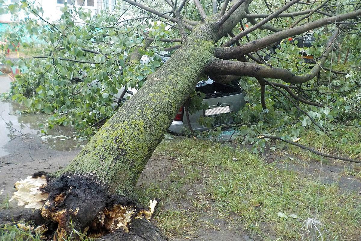 В Бобруйске упавшее дерево придавило автомобиль