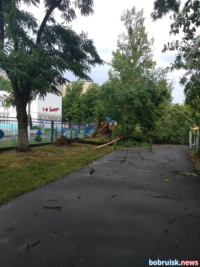 Буря в Бобруйске вырывала деревья с корнем