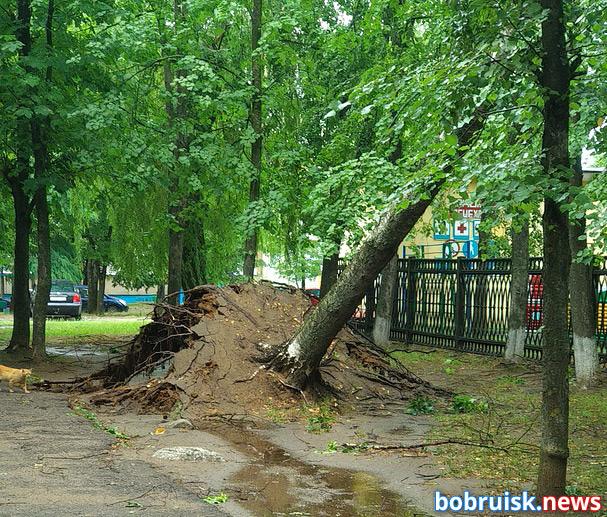 Промчавшаяся по Бобруйску в четверг, 27 июня, дождевая буря в прямом смысле наломала дров.