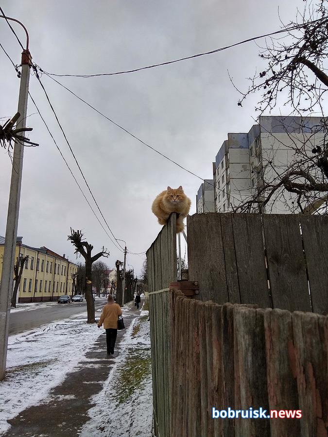 Как бобруйчане работают на улице в мороз