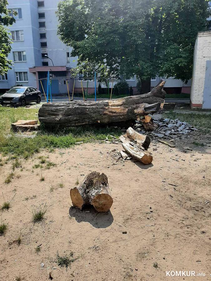 «Убрать дерево и шифер со двора в Бобруйске…»